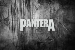 Pantera潘多拉乐队壁纸
