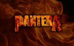 Pantera桌面壁纸